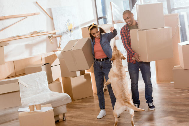 The ultimate guide to your first apartment.